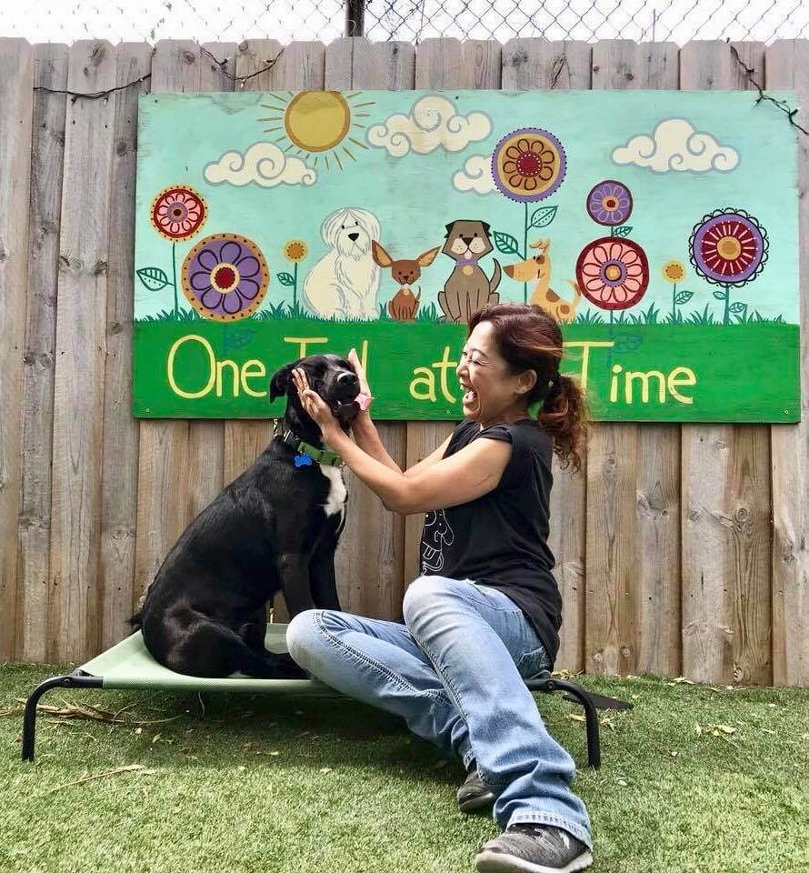one tail at a time volunteer chicago dog shelter